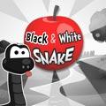 Black and white snake