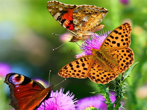Butterfly Slide